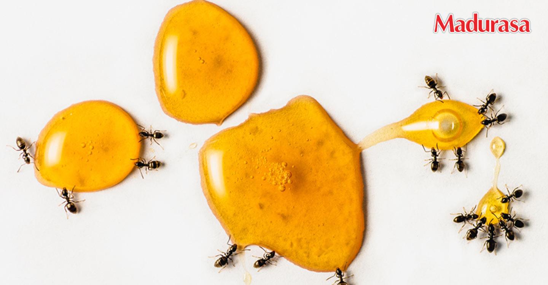 Mitos atau Fakta: Madu Dikerumuni Semut itu Nggak Asli?